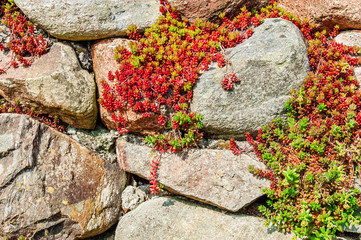 Red plants on stones