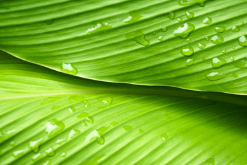 close up beautiful green leaf rain water drop