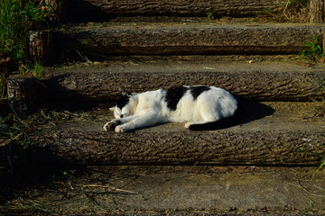 階段で寝る野良猫