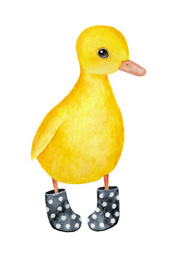 Little funny duckling character wearing black dotted welly rainboots. Bright yellow feathers, beutiful eyes. Hand drawn water color graphic painting on white background, isolated rainy day clip art.