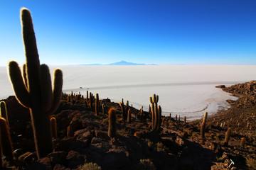 Kaktus Uyuni Salzsee lagune Bolivien Lateinamerika Reisen Work and Holiday Travel
