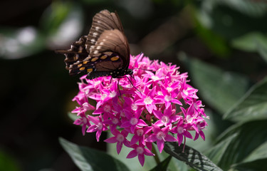 Butterfly and Pink Flowers - Macro Photography