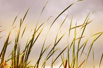 Grass blur background