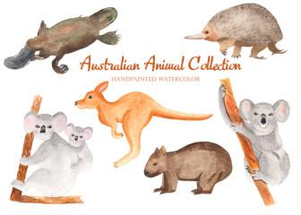 A collection of Australian animals in watercolor. Illustration of koala, kangaroo, echidna, wombat, platypus on white background.