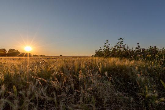Sonnenuntergang am Feldrand