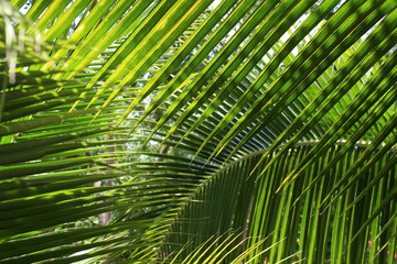 Background of tropical palm tree leaves with patterns forming from their shape and the way sunlight and shadow is falling on the leaves.