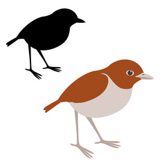 red fronted coua  bird vector illustration flat style black silhouette
