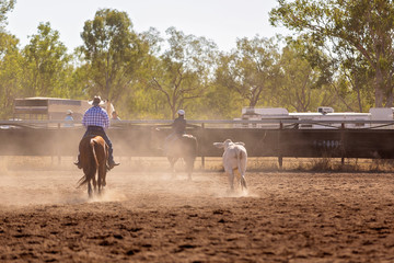 Camp Draft Event , Rounding Up Cattle - Unique To Australia