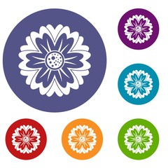Flower icons set in flat circle red, blue and green color for web