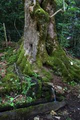 Source au pied d' un arbre dans la forêt