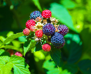 sprig with berries and a sprig of flowers strawberries