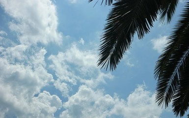 Palm leaves against the sky and clouds