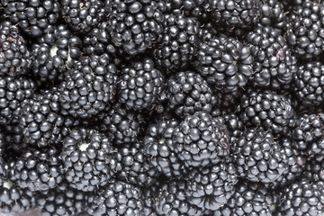 Pattern of freshly picked blackberries. Concept for healthy eating and nutrition.