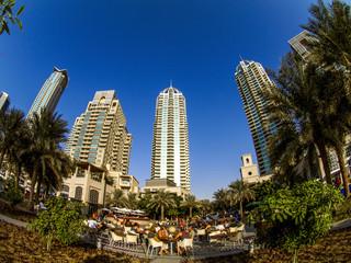 Photo Blinds Palm tree Dubai Marina, United Arab Emirates, Dubai
