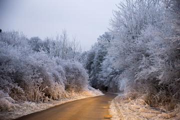 Phare de voiture éclairant la route avec les arbres blancs de givre en hiver près de Metz en Moselle