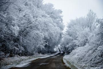 Route de Moselle en hiver avec les arbres blancs et la route partiellement enneigée.