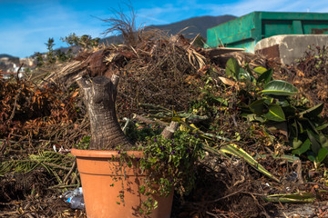 Pot with the root of the tree in the landfill of plant waste