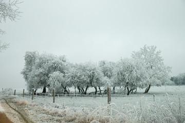 Bosquet d'arbre en hiver dans un champ cloturé