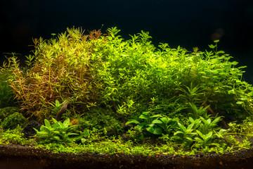 Beautiful nature decoration planted fish tank in freshwater aquarium