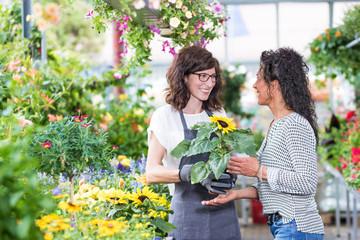 Gärtnerin im Gewächshaus verkauft einer Kundin eine Sonnenblume im Topf