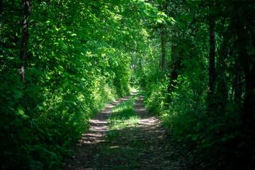Chemin baigné de lumière dans un bois au bord de la Moselle