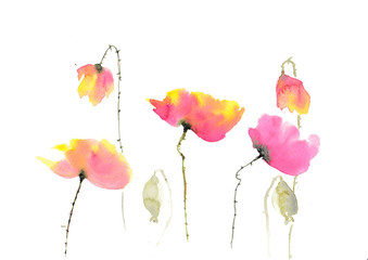 Stylized poppies on white background, watercolor illustrator, hand painted, floral art