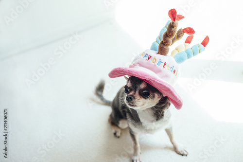 A Dog Wearing Hat In The Shape Of Birthday Cake Is Sitting On Floor