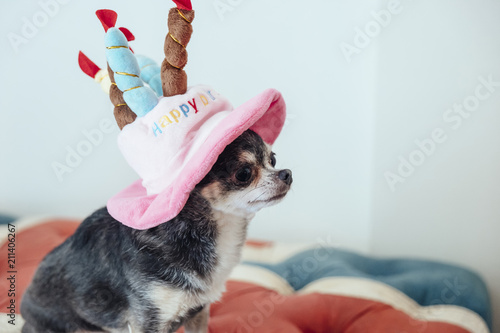 A Pretty Profile Of Dog Wearing Hat In The Shape Birthday Cake