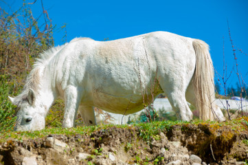 Domestic horse on a field