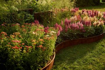 Field of white and pink astilba. Garden design