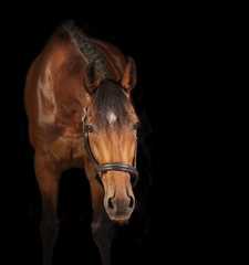 Horse black background