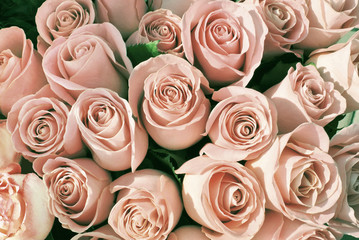 Pink roses background. Natural pink flowers