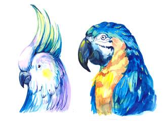 Flying tropical parrot Ara. Watercolor hand drawn illustration
