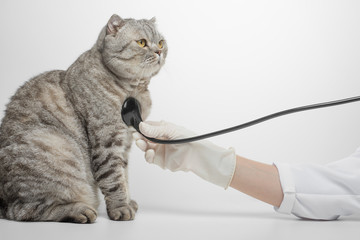 Cat and Stethoscope Isolated on White Background