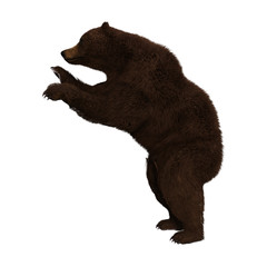 Adult Brown Bear isolated on white, 3d render.