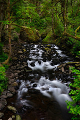 Lush forest with white water stream. Forest creek in Columbia River Gorge area in summer.  Portland. Oregon. United States of America.