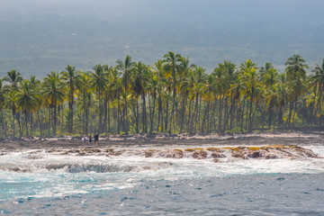 Palm trees on the shoreline