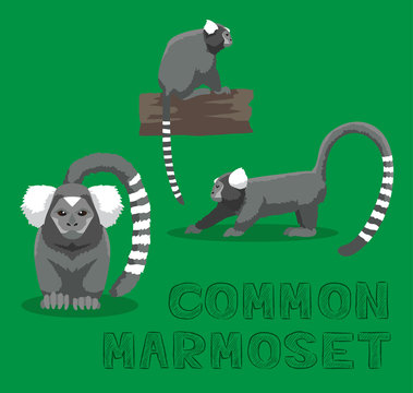 Monkey Common Marmoset Cartoon Vector Illustration