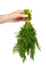 Fresh green dill with hand isolated on the white background, studio macro image.
