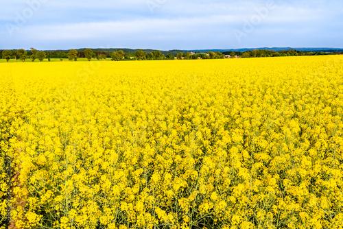 Rapeseed Field Yellow Flowers Of Rape Farm Fields And Sky Scenic