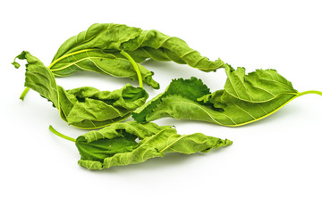 Dry mulberry leaves for medical use on white background