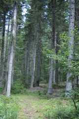 In the Forest - Western Rodopi Mountains, Bulgaria