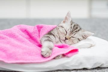 Cute taby kitten sleeping on pillow under blanket