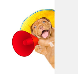Funny dog in summer hat holds megaphone behind white banner. isolated on white background