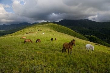 A mountain summer landscape with a herd of horses grazing on the green meadow before the rain.