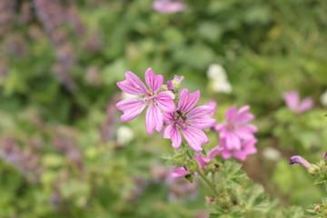 Pink flowers bloom in a meadow