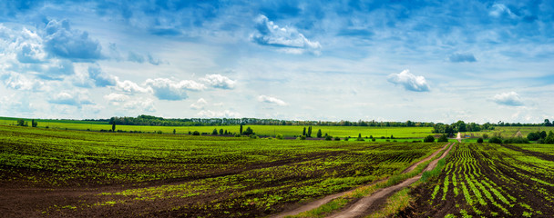 Fototapete - panoramic view with a fields and dirt road