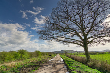A bare tree by the side of a long, straight country lane.