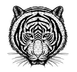 Tiger vector drawing on white background.Tiger tattoo art highly detailed in line art style.