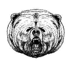 Bear vector drawing on white background.Bear tattoo art highly detailed in line art style.